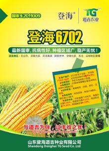 玉米种子6702海报