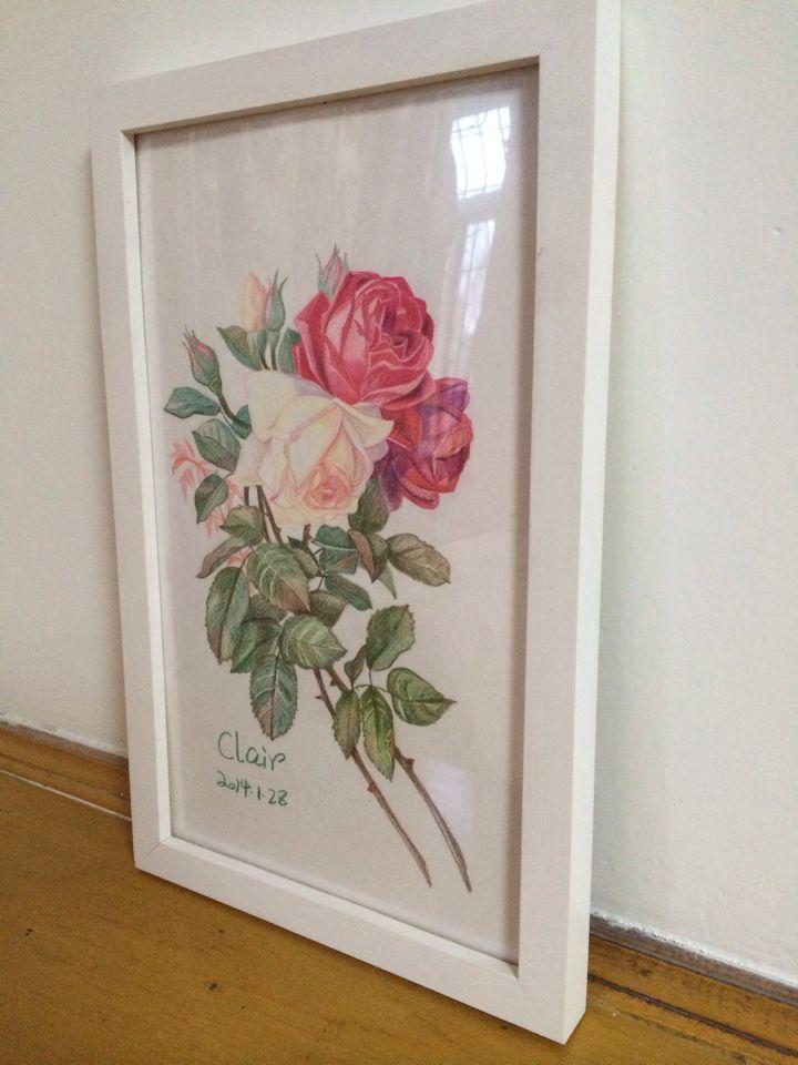 彩铅手绘月季花_七色方创意设计工作室案例展示