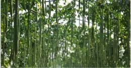 农村旅游策划:创意瓜果王国•让瓜果旅游更上一层楼