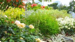 混合花境设计与种植建议