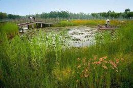【设计集锦】湿地景观设计要点